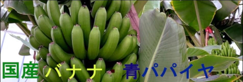 【笠岡市】瀬戸内ばなな&青パパイヤ